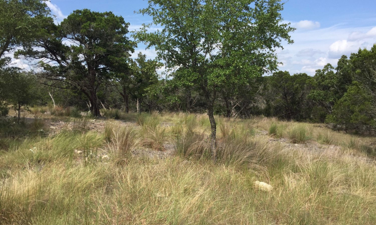 Lot 10A for Sale at the Springs of Cordillera Ranch